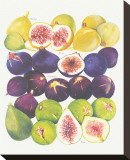 Figs and Dates Stretched Canvas Print
