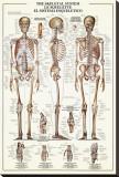 The Skeletal System Stretched Canvas Print