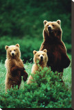 Three Bears Stretched Canvas Print