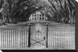 Oak Alley Plantation, Louisiana Stretched Canvas Print