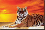 Tiger Stretched Canvas Print