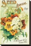 Seed Annual 1897, D.M. Ferry & Co., Detroit, Michigan Stretched Canvas Print