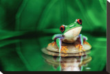 Red-Eyed Tree Frog Stretched Canvas Print