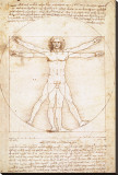 Vitruvius Man Stretched Canvas Print by  Leonardo da Vinci