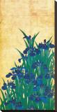 Irises, Japanese Stretched Canvas Print by Ogata Korin