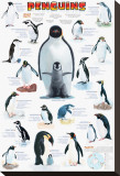 Penguins Chart Stretched Canvas Print