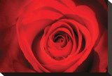 Red Rose Heart Stretched Canvas Print by Harold Davis