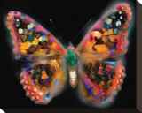 My Brilliant Butterfly Stretched Canvas Print by Harold Davis