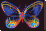 Butterfly II Stretched Canvas Print by Harold Davis
