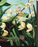 Yellow Orchids Stretched Canvas Print by Pamela Jablonski