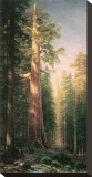Giant Trees, Mariposa Grove, California Stretched Canvas Print by Albert Bierstadt