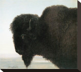 Bison Head Stretched Canvas Print by Albert Bierstadt