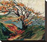 Tree in Autumn Sträckt Canvastryck av Emily Carr