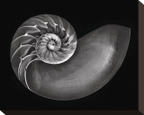 Nautilus in Black and White Stretched Canvas Print by Harold Davis