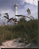 Lighthouse Terns II Stretched Canvas Print by Steve Hunziker