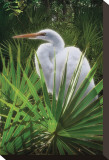 Palmetto Egret Stretched Canvas Print by Steve Hunziker