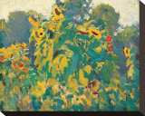 Sunflowers, Thornhill Stretched Canvas Print by J. E. H. MacDonald