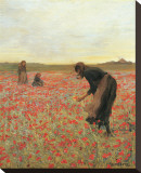 Girls in Poppy Field Stretched Canvas Print by Lawren Morris