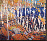 In the North Land Stretched Canvas Print by Tom Thomson