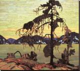 The Jack Pine Lærredstryk på blindramme af Tom Thomson