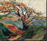 Tree in Autumn Stretched Canvas Print by Emily Carr