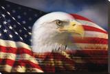 Bald Eagle and American Flag Leinwand