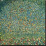 Apple Tree I, c.1912 Stretched Canvas Print by Gustav Klimt