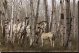 Birchwood Family Stretched Canvas Print by Steve Hunziker