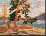 The Pine Tree Reproduction transférée sur toile par Tom Thomson
