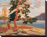The Pine Tree Stretched Canvas Print by Tom Thomson