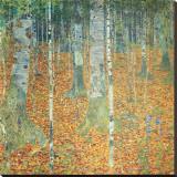 Forêt de bouleaux, vers1903 Reproduction transférée sur toile par Gustav Klimt