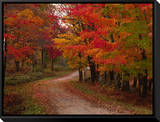 Country Road in the Fall, Vermont, USA Framed Canvas Print by Charles Sleicher