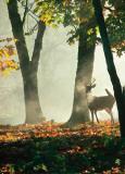 Cerf dans la Forêt Prints by Victoria Hurst