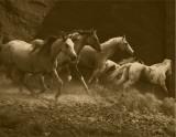 Wild Horses I Art