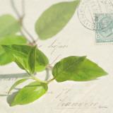 Vine Leaf Posters by Deborah Schenck