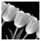 Tulip Line Prints