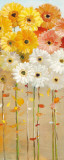 Daisies Fall I Prints by Danhui Nai