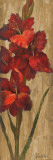 Vivid Red Gladiola on Gold Poster by Silvia Vassileva