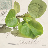 Apple Leaf Prints by Deborah Schenck