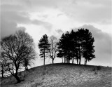 Trees on Hill Prints