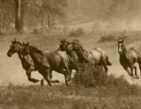 Wild Horses II Pósters