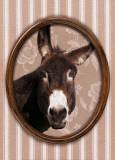 Portrait d'âne Poster autor Jean-Michel Labat