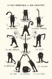 Le Chat Domestique Posters