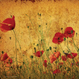 Field of Poppies - Poster
