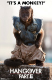 Hangover 2 - Monkey Photo