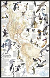Bird Migration Map, Western Hemisphere Posters by Arthur Singer
