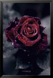 Luxury Rose Poster