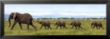 Elefanter, på række med snablerne om hinandens haler Posters