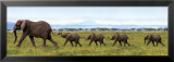 Elefantit linkitettynä Julisteet