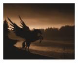 Pegasus Giclee Print by Julie Fain